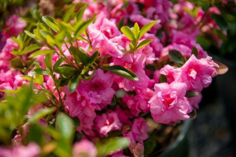 Plants Northwest Seattle S Premier Sources Of Wholesale Plants